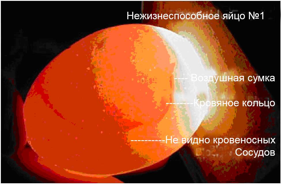 Кольцо на яйца зачем фото 244-445